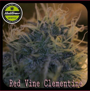 Red Vine Clementine - Madd Farmer 🚻