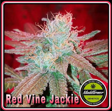 Load image into Gallery viewer, Redvine Jackie - Madd Farmer 🚻