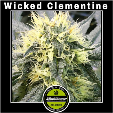 Wicked Clementine BX - Madd Farmer 🚻