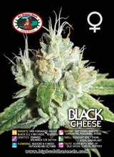 Load image into Gallery viewer, Black Cheese - Big Buddha Seeds🚺