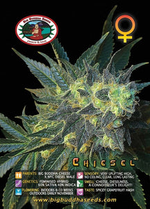 Chiesel -  Big Buddha Seeds🚺