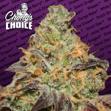 Blue Kush Berry (Indica) - Chongs Choice 🚺