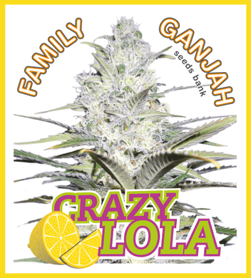 Crazy Lola - Family Ganjah 🚺
