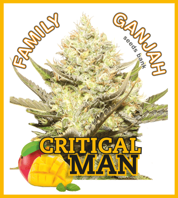 Critical Man - Family Ganjah 🚺