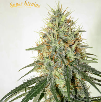 Enemy of the State - Super strains 🚺