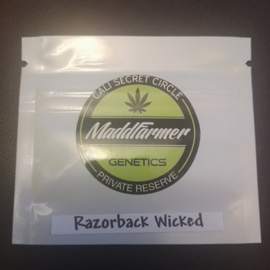Razorback Wicked - MaddFarmer 🚻💚NEW💚