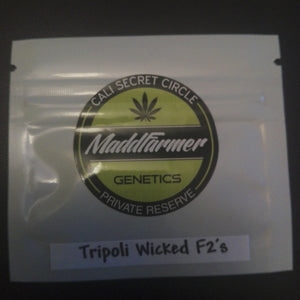 Tripoli Wicked F2 - MaddFarmer 🚻 💚NEW💚