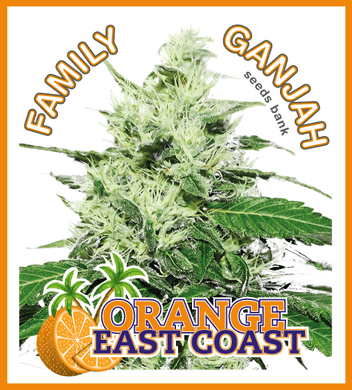 Orange East Coast - Family Ganjah 🚺