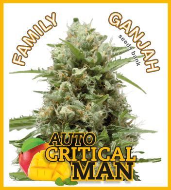 Critical Man Auto - Family Ganjah 🚺