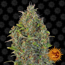 Load image into Gallery viewer, Critical Kush Auto - Barney's Farm🚺