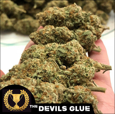Devil's Glue - Devil's Harvest Seeds🚺