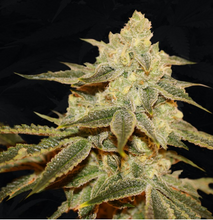 Load image into Gallery viewer, Birthday Cake x Strawbanana Cream - THSeeds 🚻