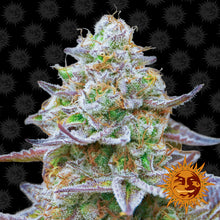 Load image into Gallery viewer, Gorilla Zkittlez - Barney's Farm🚺