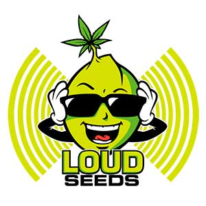 Loud Lemonade - Loud Seeds 🚻