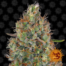 Load image into Gallery viewer, Sweet Tooth Auto - Barney's Farm🚺