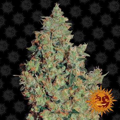 Tangerine Dream - Barney's Farm🚺