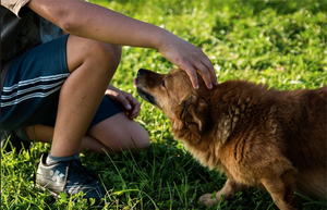 Creating a Two-Pronged Approach for Your Dog's Arthritis