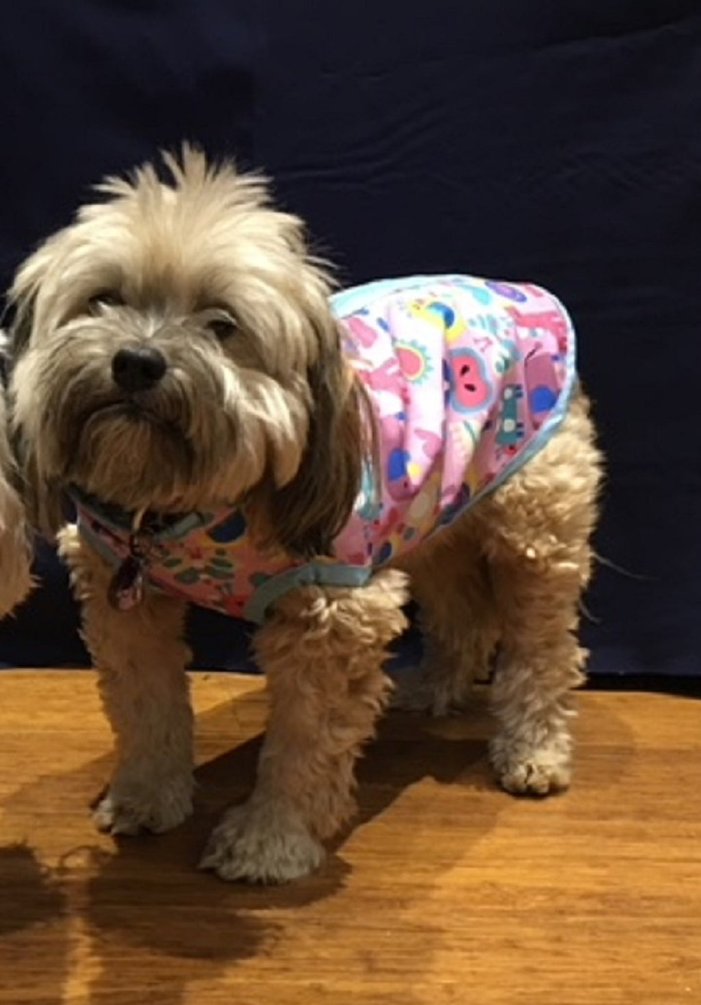 """Happy Animals"" Dog Coat - Yum Dog Treats Online"