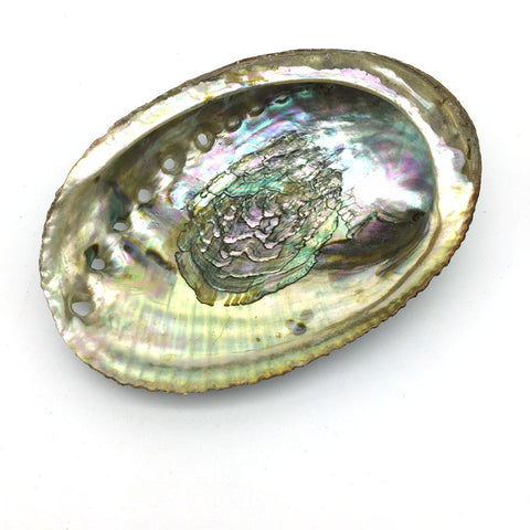 "Abalone Sea Shell 100% Natural Smudging Burner Resin Incense Or Sage - 5"" Long"