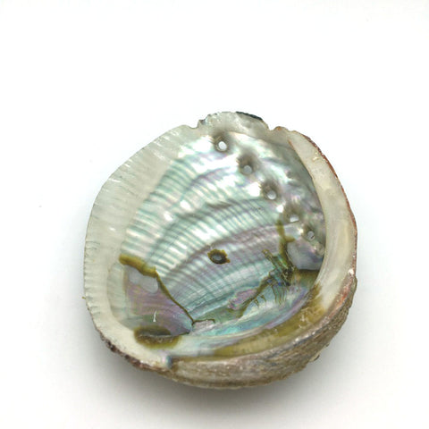 "100% Natural Abalone Sea Shell Smudging Burner Resin Incense Or Sage - 4"" Long"