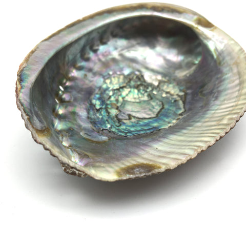 "Abalone Sea Shell 100% Natural Smudging Burner Resin Sage Incense - 4.5"" Long"