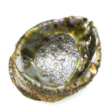 "Abalone Sea Shell 100% Natural Smudging Burner Resin Sage Or Incense - 6"" Long"