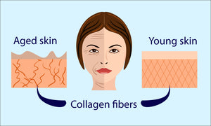 What Collagen Does and Which Collagen is Best