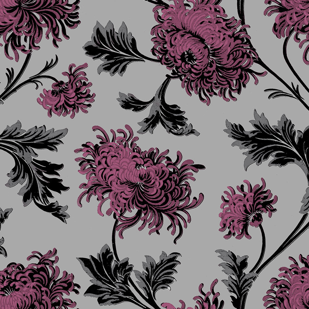 Chrysanthemum - Pink Wallpaper