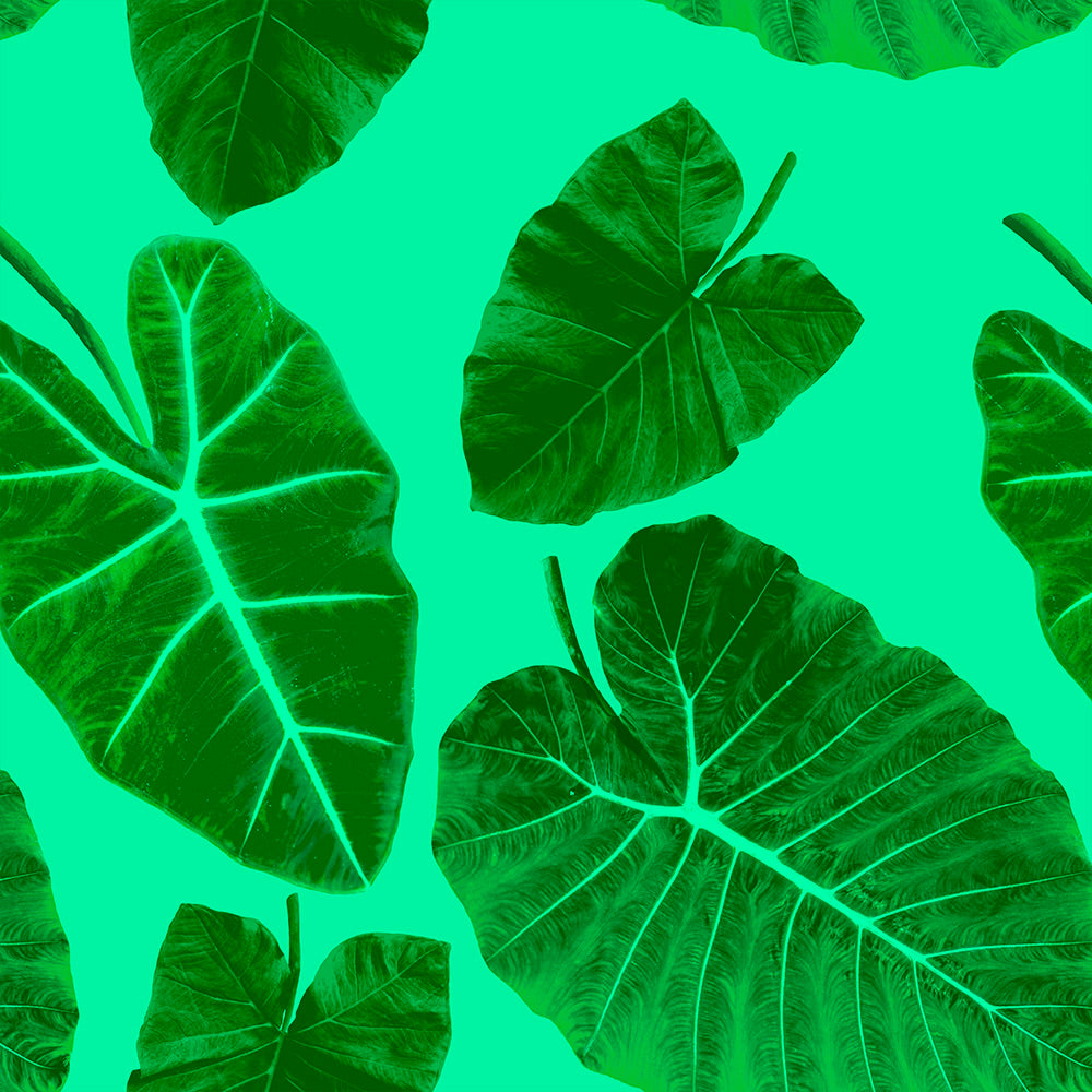 Alocasia - Element Wallpaper