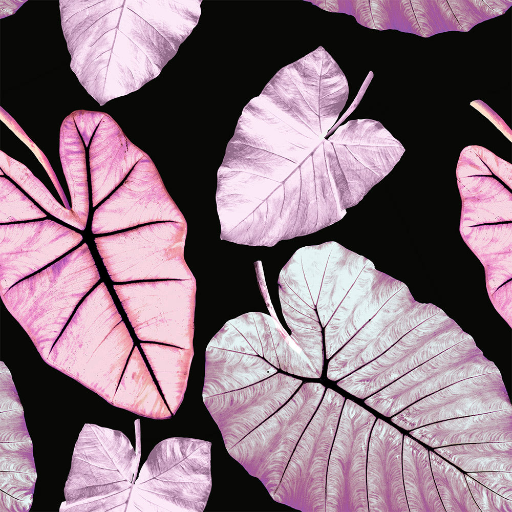 Alocasia - Petal Wallpaper