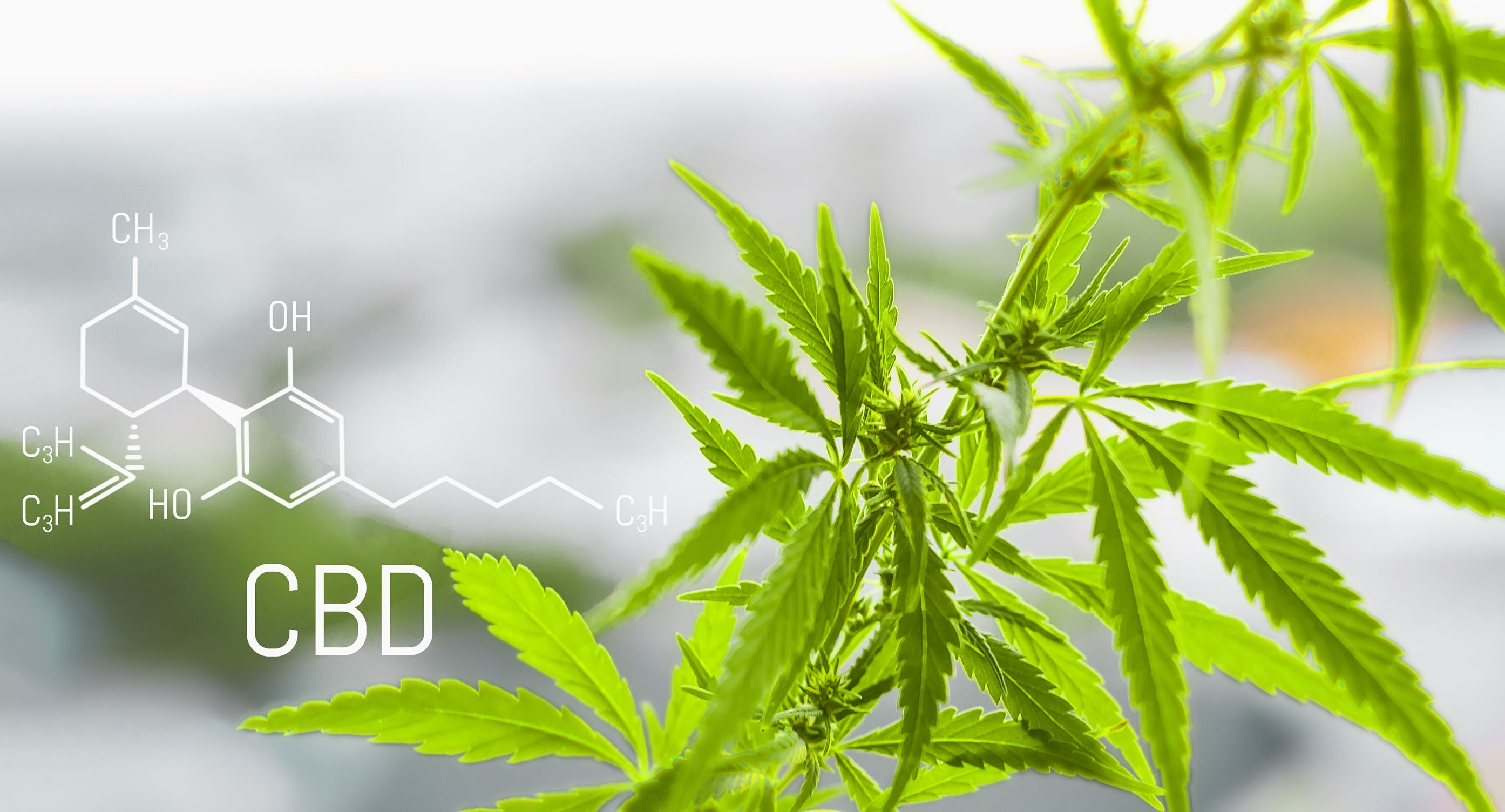 CBD 101: Your Guide To Understanding CBD