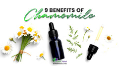 9 Chamomile Benefits & Chamomile Essential Oil Benefits Backed by Science