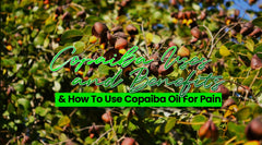 Copaiba Uses and Benefits & How To Use Copaiba Oil For Pain