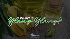 What Is Ylang Ylang? What Are Uses For Ylang Ylang? The Benefits Of Ylang Ylang Essential Oils