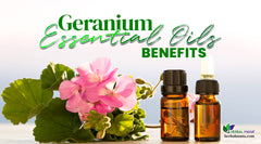 Geranium Essential Oil Benefits: Skin, Stress, Nerve Pain & More!