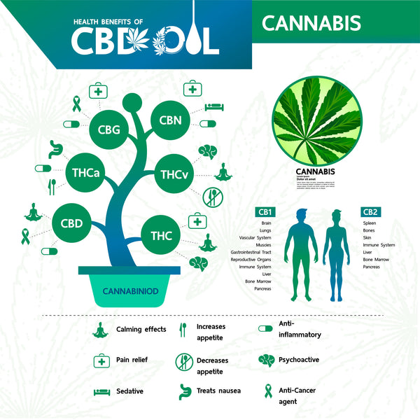 vector graphic showing the many benefits of CBD