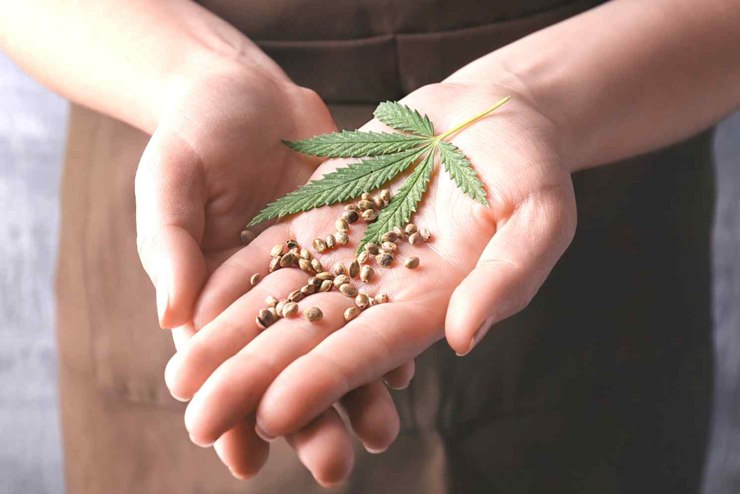 CBD for nerve pain, cannabis leaf in hand with hemp seeds, closeup