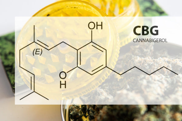 CBG and CBN for Nerve Pain dry herb in grinder with chemical map over top