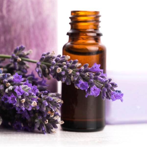 Lavender Essential Oils with Lavender Plant Flowers