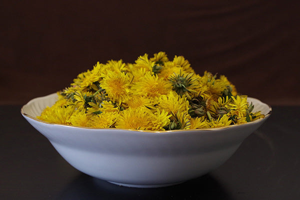 the benefits of dandelion uses for dandelion dandelion tea benefits yellow full bloom dandelion flowers in a white decorative bowl with dark brown background