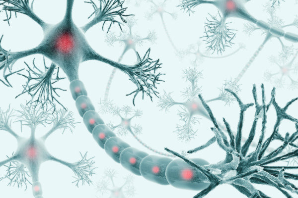how long do damaged nerves take to heal what natural therapies are available for healing damaged nerves microscopic image of nerves neural network