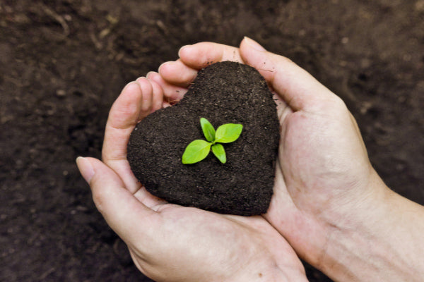 inner warrior for nerve pain person holding heart of dirt with tree sprout close up
