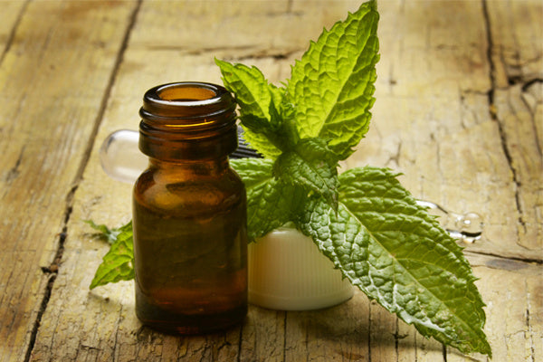 peppermint essential oil benefits uses peppermint essential oil in an amber glass jar with peppermint leaves droppers sitting on wooden table