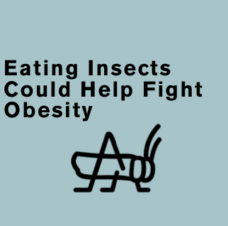 Eating Insects Could Help Fight Obesity - U.N.