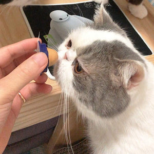 Healthy Cat Candy Treat