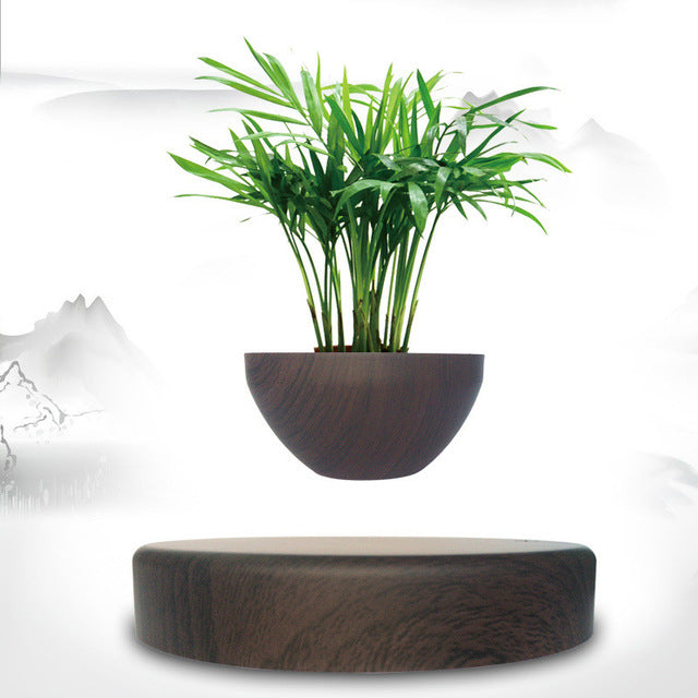 Levitating Bonsai Pot - Treehouse Supply - Plastic free, ecofriendly products