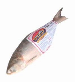 HILSHA WHOLE FISH BLOCK