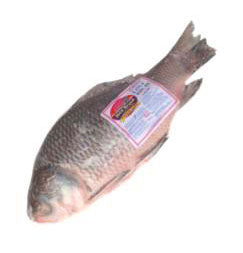 IBCO KATLA ( BAUSH ) FISH WHOLE