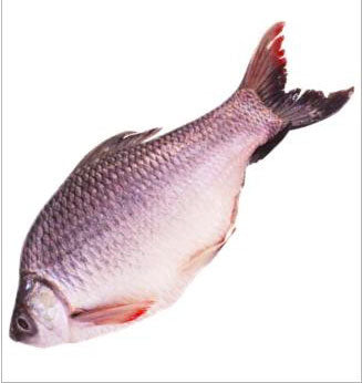 Rohu Fish whole