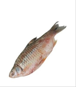 IBCO SHORPUTI FISH WHOLE